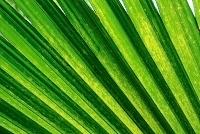 Palmový list